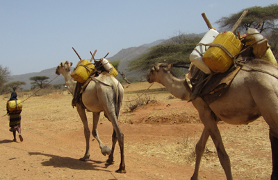 Enhancing Sustainable Livelihoods in Drylands